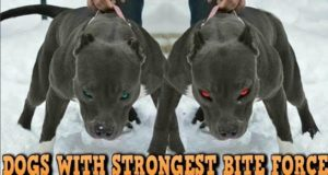 Top 10 Latest Strongest Dogs in the worldTop 10 Latest Strongest Dogs in the world