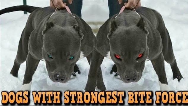 Photo of Top 10 Latest Strongest Dogs in the world