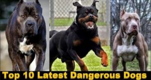 Top 10 latest Dangerous Dogs In The World