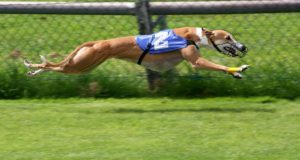 Top 10 Latest Fastest Dogs In The World