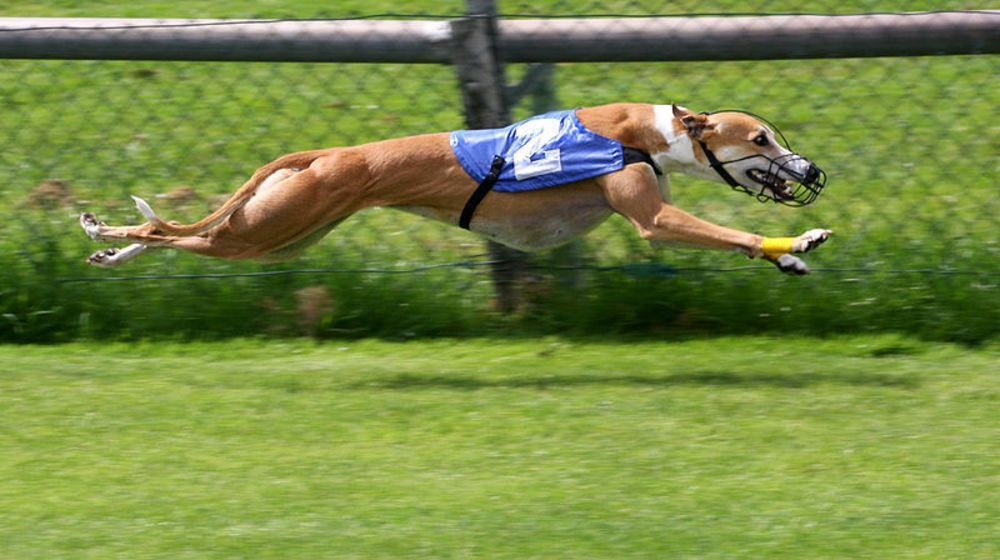 Photo of Top 10 Latest Fastest Dogs In The World