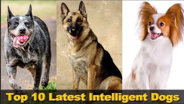 Photo of Top 10 Latest Intelligent Dogs In The World