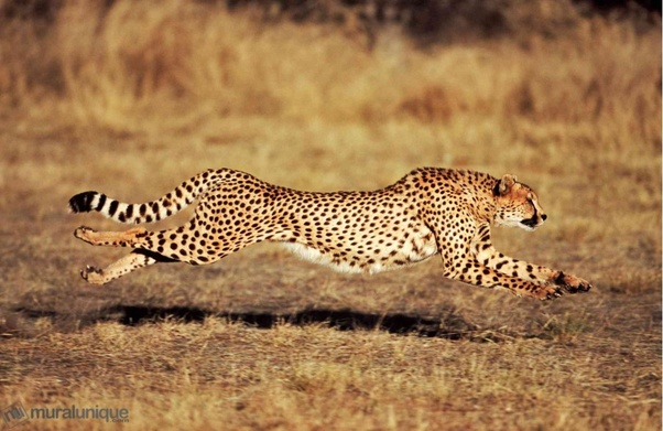 Photo of Top 10 Latest Ridiculously Fastest Animals on the Earth