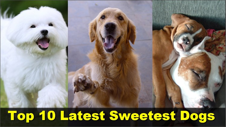 Photo of Top 10 Latest Sweetest Dogs In The World
