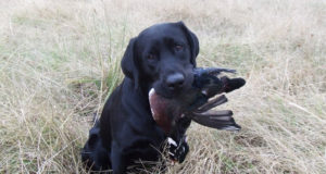 Top 10 Latest Hunting Dogs In The World