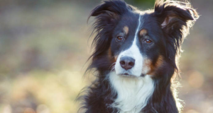 Top 10 Latest Smartest Dog Breeds In The WorldTop 10 Latest Smartest Dog Breeds In The World