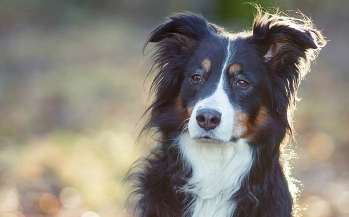 Photo of Top 10 Latest Smartest Dog Breeds In The World