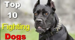 Top 5 Latest Ultimate Fighting Dogs In The World