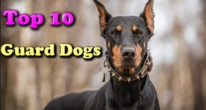 Top 10 Latest Smartest Dog Breeds In The World