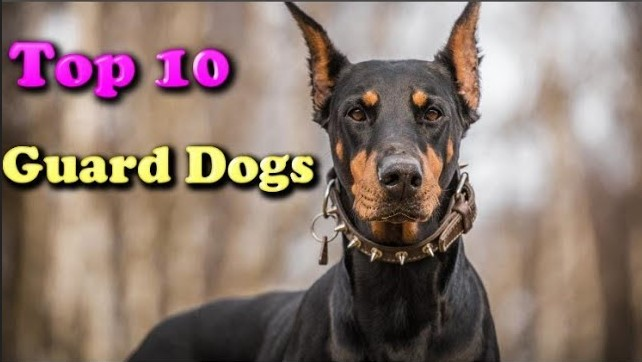 Photo of Top 10 Latest Guard Dogs In The World