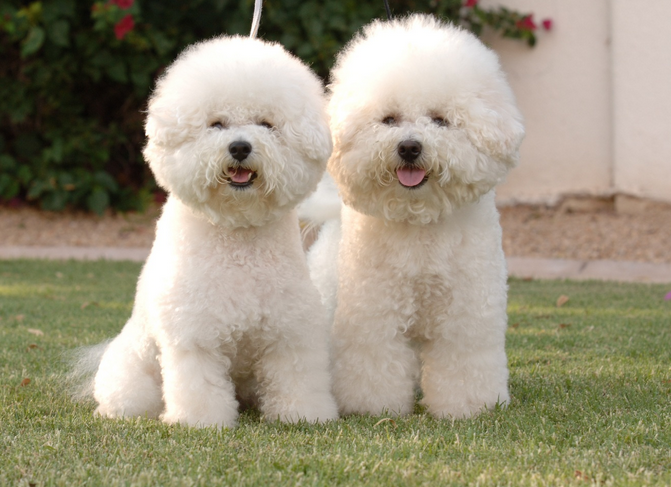 Photo of Top 10 Latest Expensive Dog Breeds In The World