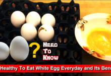 Photo of Is It Healthy To Eat White Egg Everyday and Its Benefits? [HD]